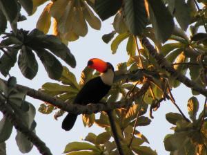 Vogels zijn erin de Pantanal in alle soorten en maten