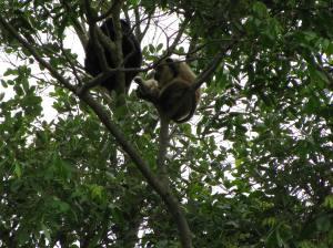 Af en toe laten de primaten zich ook zien
