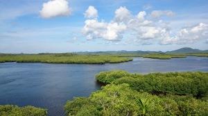 De mangroves zijn een lust voor het oog.